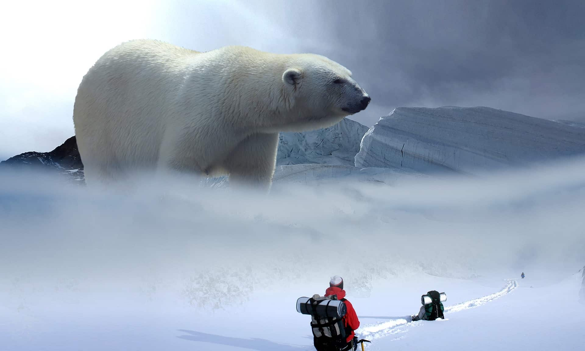 What does the polar bear eat in Minecraft?